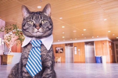 cat wearing a tie