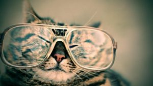 cat-wearing-glasses
