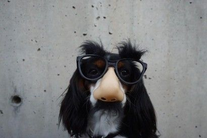 dog-wearing-glasses