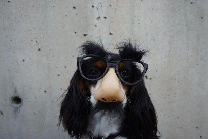 dog-wearing-glasses