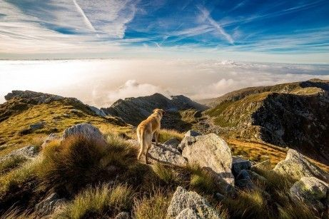 dog-exercising-in-mountains
