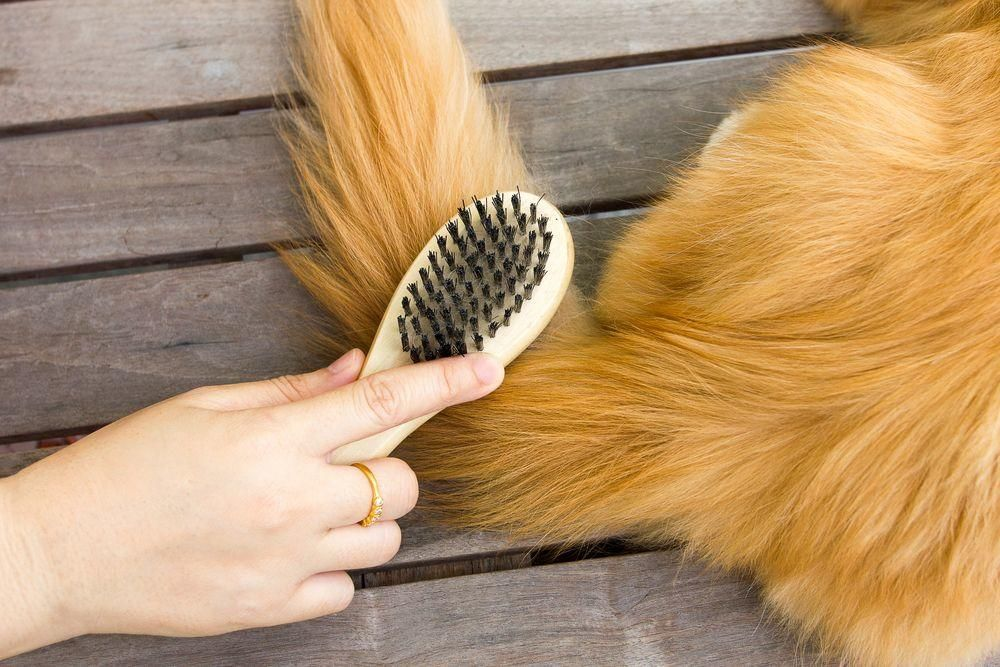 Four Tips For Taking Care of Long-Haired Cats