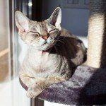 cat_sun_bathing_on_cat_tree