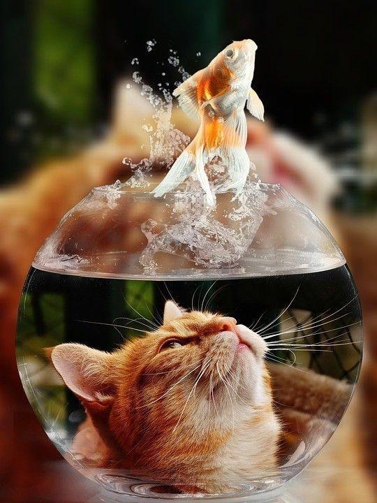 Cats Behaving Badly: A Guide to Destructive Feline Behaviors