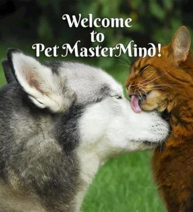 Welcome to Pet MasterMind!